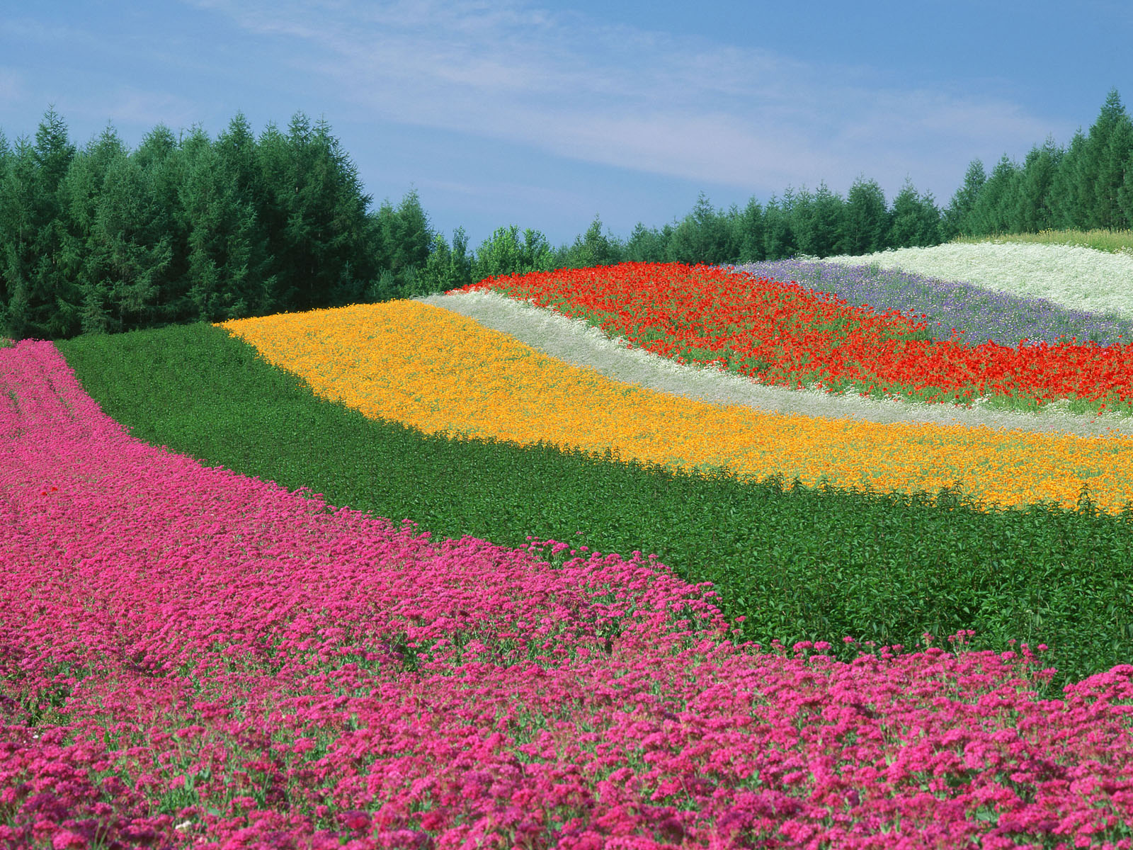 World s amazing gardens and flower fields for Most beautiful garden flowers