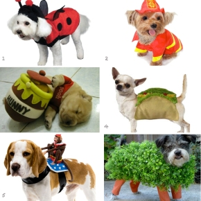 Unforgettable Costumes For YourPooch